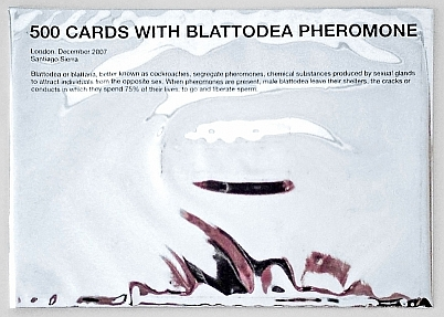 One out of 500 Cards with Blattodea Phermone